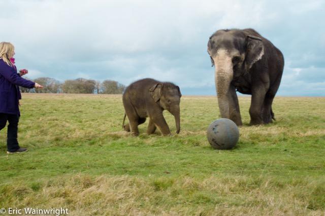Megan and elephantsx3