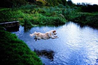 bellajumping in the lake_o