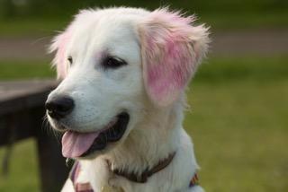 pink-ears-freya