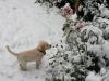 Emma\'s first Christmas