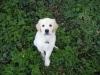 Traffy as a Puppy