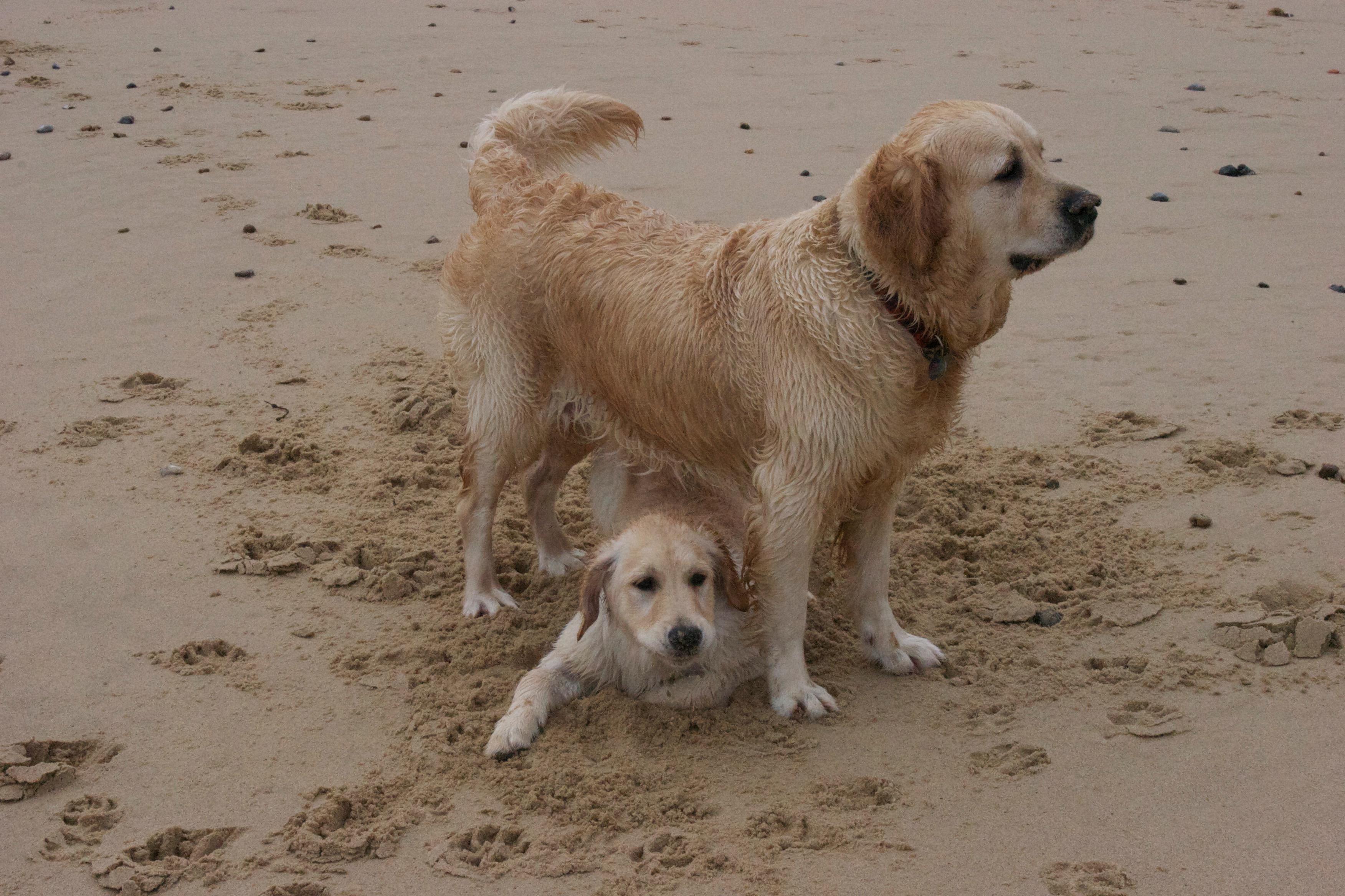 Traffy and Bella in Norfolk